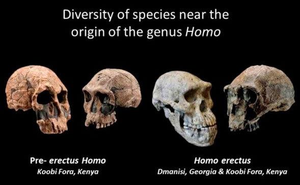 Diversidad de especies en el origen del género Homo
