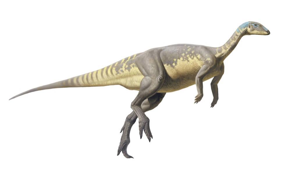 Eousdryosaurus nanohallucis