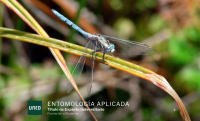 Portada de la Web del Curso de Entomología Aplicada