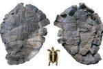 Pelorochelon, la primera tortuga gigante terrestre de Europa